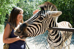 Girl and zebra. The meeting human and the zebra in the zoo Royalty Free Stock Photo