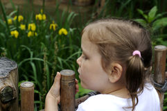 Girl at the Zoo Stock Image