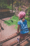 Girl in the zoo Royalty Free Stock Photography