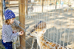 Girl in zoo Stock Image