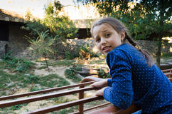 A girl at the zoo looks at the tigers. Stock Images