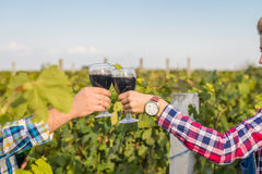 The girland guy in the vineyard. The girl and the guy in the vineyard drink red wine Royalty Free Stock Images