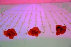 Girlande von Blumen, Brauthochzeitsblumen stockbild