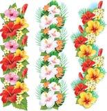Girlande von Hibiscusblumen Lizenzfreies Stockfoto