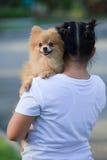 Girlholding  pomeranian dog Royalty Free Stock Images