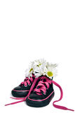 Girlie Sneakers. Daisy bouquet in a pair of little girl's sneakers isolated on white royalty free stock image