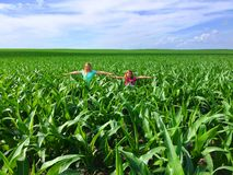 Girls acting like scarecrows in the corn field. Young girls acting like scarecrows in the corn field Royalty Free Stock Image