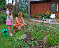 Girls and alpine flowers. A beautiful alpine garden containing a wide variety of plants Flowers Stock Photography