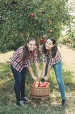 Girls with Apple in the Apple Orchard. Beautiful sisters with Organic Apple in the Orchard. Harvest Concept. Garden, teenagers eating fruits at fall harvest Stock Photos
