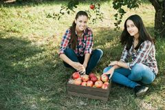 Girls with Apple in the Apple Orchard. Beautiful sisters with Organic Apple in the Orchard. Harvest Concept. Garden, teenagers eating fruits at fall harvest Royalty Free Stock Images