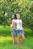 Girls in an apple orchard Royalty Free Stock Photography