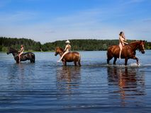 Girls bathe horse in the lake. Royalty Free Stock Image