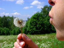 Girls blow the dandelion blossom. In the nature Royalty Free Stock Image