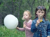 Girls blows on dandelion Stock Photo