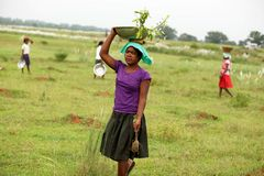 Girls busy in plantation Stock Photo