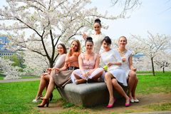 Girls with champagne celebrating in sakura's garden. Royalty Free Stock Photography
