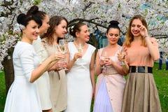 Girls with champagne celebrating in sakura's garden. Royalty Free Stock Photo