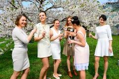 Girls with champagne celebrating in sakura's garden. Stock Photo