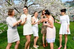 Girls with champagne celebrating in sakura's garden. Stock Photography