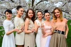 Girls with champagne celebrating in sakura's garden. Stock Image