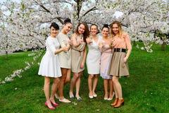 Girls with champagne celebrating in sakura's garden. Royalty Free Stock Photography