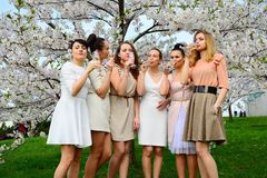 Girls with champagne celebrating in sakura`s garden. Stock Image