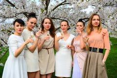 Girls with champagne celebrating in sakuras garden. Girls with glass of champagne celebrating in Vilnius sakuras garden royalty free stock images