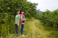 Girls in citrus orchard. Two beautiful chinese girls were standing in citrus orchard stock photos