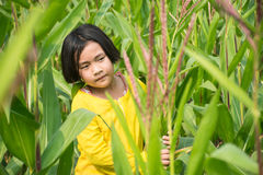 Girls in cornfield Royalty Free Stock Images