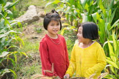 Girls in cornfield Royalty Free Stock Photography