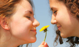 Girls with dandelion Stock Image