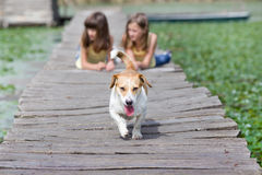 Girls with dog on dock Stock Photography