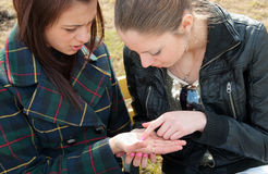 Girls examine lines on a palm Royalty Free Stock Images