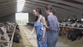 Portrait two girls farmers making a tour of the barn with cows on the farm. Girl farmer shows the visitor cows and. Girls farmers making a tour of the barn with stock video