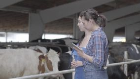 Portrait two girls farmers making a tour of the barn with cows on the farm. Girl farmer shows the visitor cows and. Girls farmers making a tour of the barn with stock footage