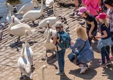 Girls feed swans in Prague royalty free stock photography