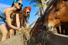 Girls feeding her horses Stock Images