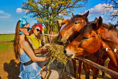 Girls feeding her horses Royalty Free Stock Photo