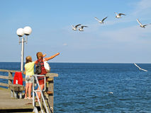 Girls feeding sea gulls Royalty Free Stock Photos