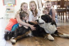 Girls on the floor with the Bernese Mountain Dog. The girls on the floor with the Bernese Mountain Dog stock photo