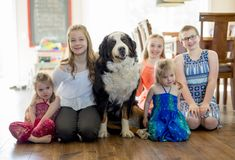 Girls on the floor with the Bernese Mountain Dog. The girls on the floor with the Bernese Mountain Dog stock images