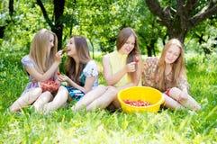 Girls gathering strawberry on bright summer day Stock Photos