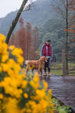 Girls and golden retrievers Stock Photography