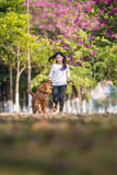 Girls and golden retrievers run on the grass Royalty Free Stock Images
