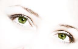 Girls green eys. Green eys on white BG Stock Image