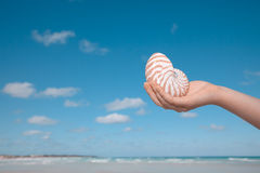 Girls hand holding nautilus shell Stock Photography