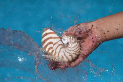 Girls hand holding nautilus shell and splash Royalty Free Stock Image
