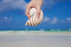 Girls hand pouring water from nautilus shell Royalty Free Stock Image