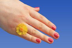 Girls hand with yellow flower against blue sky Stock Image