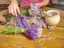 Girls hands are binding levander bunches in old farm. Aromatic therapy royalty free stock photo